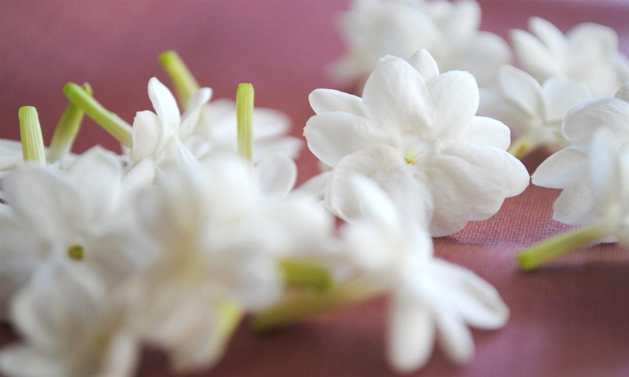 Jasmine Flower Must Wallpaper